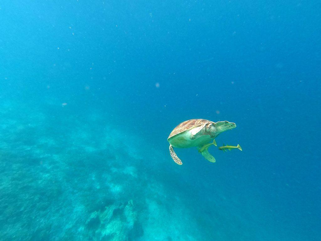 Qué hacer en las islas Gili -Haz La Mochila