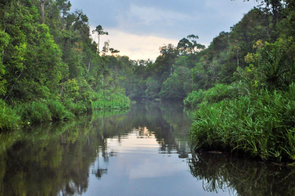 Viajar en klotok por Borneo - Haz La Mochila
