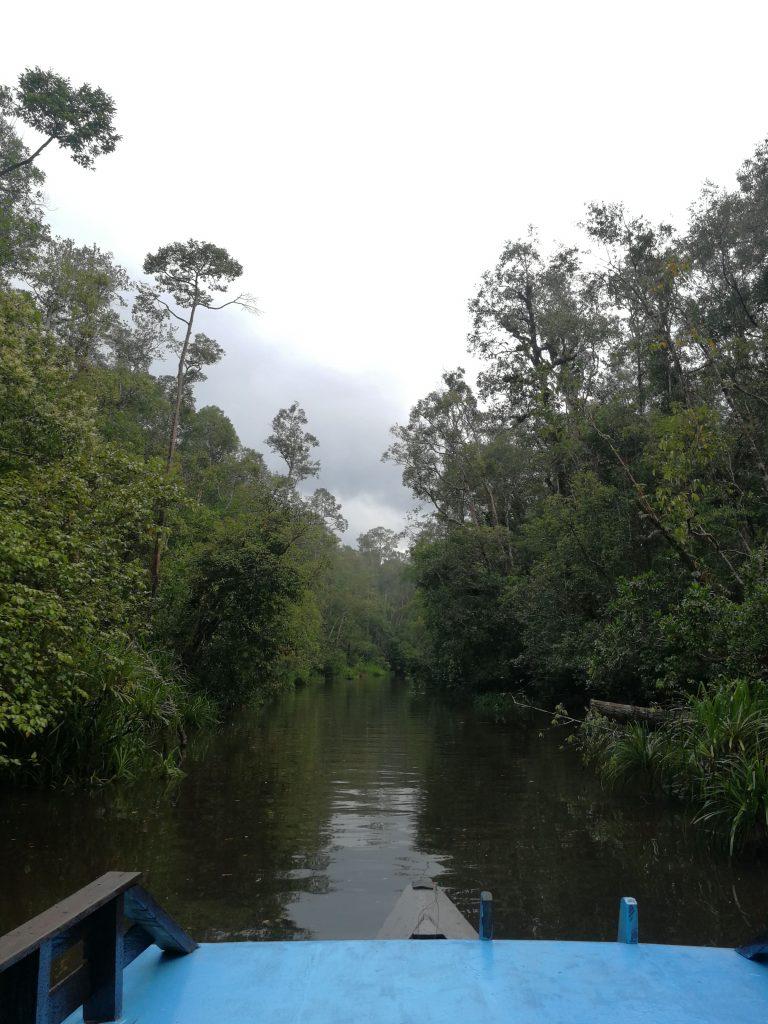 Ruta en klotok en Borneo