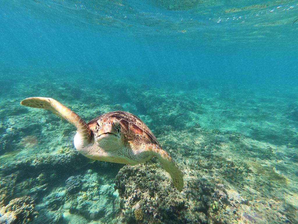 Islas Gili qué ver - Haz La Mochila