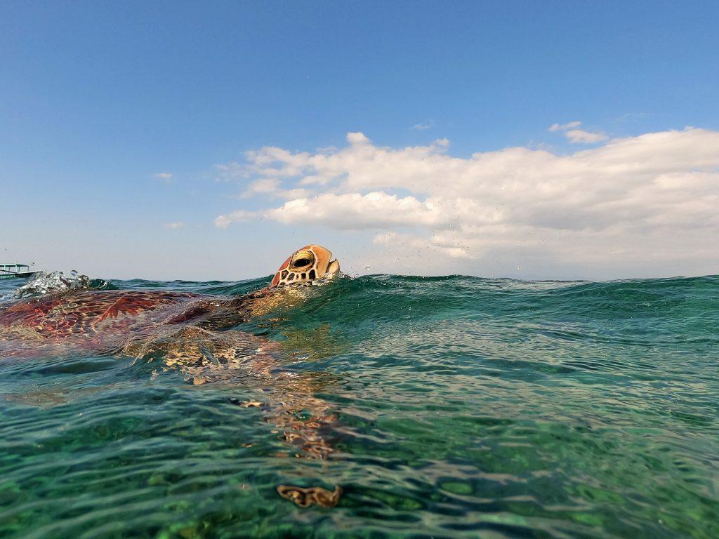 Ver tortugas en las islas Gili - Haz La Mochila