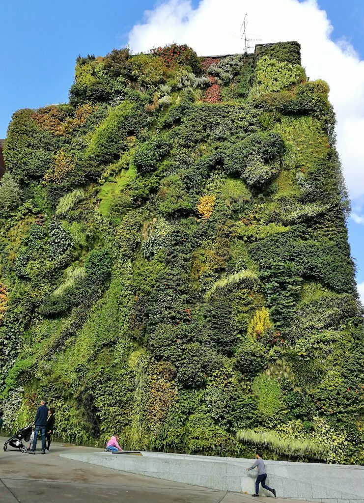 Jardín vertical - Haz La Mochila