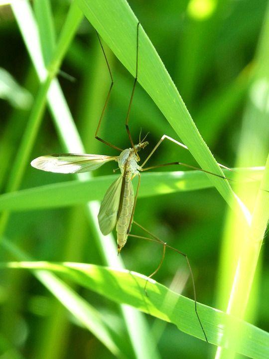 Prevención de la malaria - Haz La Mochila